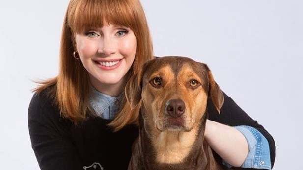 "Bryce Dallas Howard Lends Voice to Bella in ""A Dog's Way Home"""