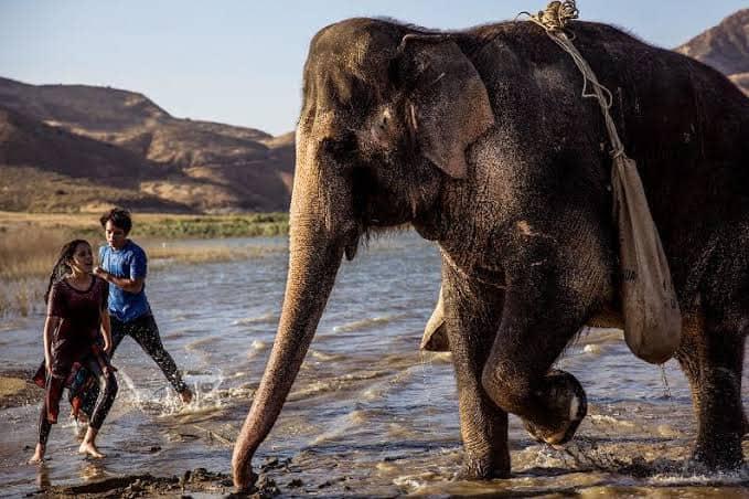 Flora the elephant (2)